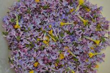 Crème aux fleurs de lilas © CDT 03
