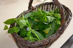 Pesto aux orties et ail des ours © CDT 03
