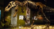 Exposition dinosaures Allier