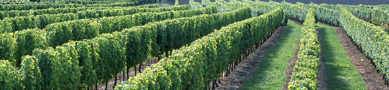 Les vins de Saint-Pourçain