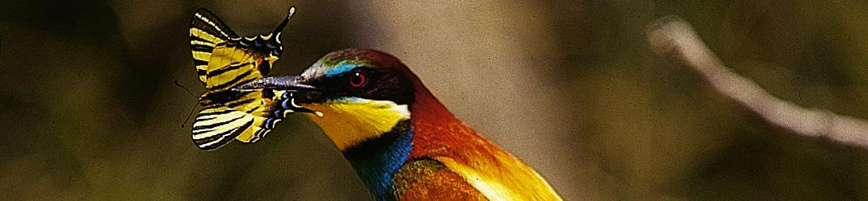 Ornithologie en val d'Allier
