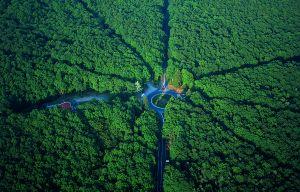 Rond en forêt de Tronçais © Franck LECHENET / CDT 03