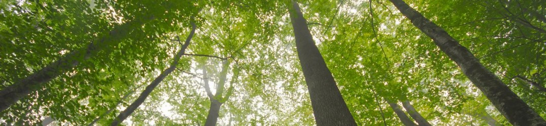 Séjour en forêt de Tronçais dans des Tipis