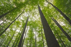 Forêt de Tronçais © Luc OLIVIER / CDT 03
