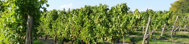 Jour 8 - Terres du vignoble de Saint-Pourçain