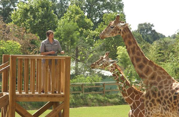 parc animalier le pal zoo du pal allier tourisme. Black Bedroom Furniture Sets. Home Design Ideas