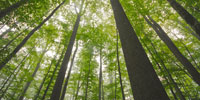 Majestueuse forêt de Tronçais