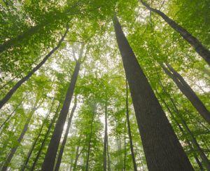 Forêt de Tronçais © Luc OLIVIER